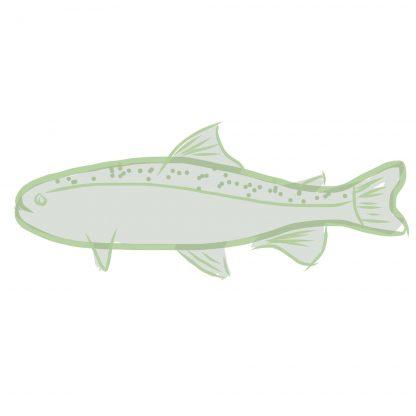 fishmonger, fish, the rural supply